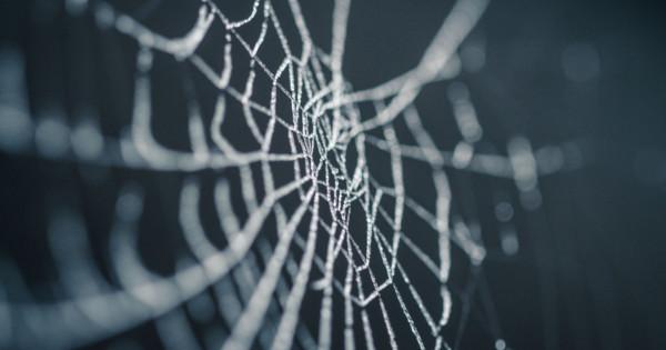 Móda budúcnosti Všetci sa oblečieme do pavučiny
